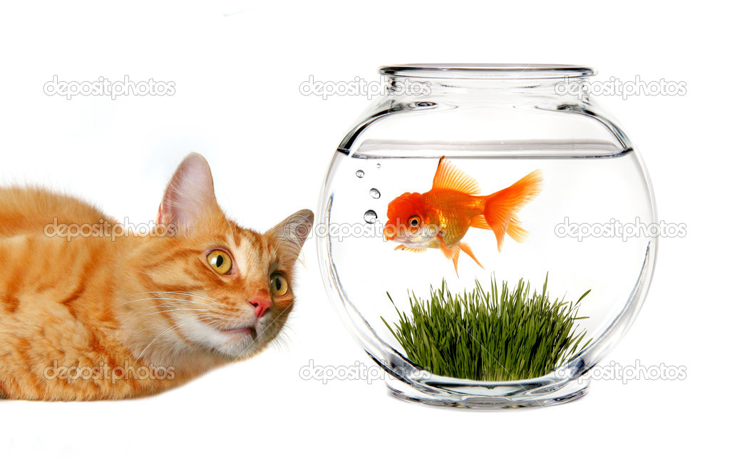 Orange Tabby Cat Mischievously Watching a Goldfish in a Bowl — Stock Photo #2268185