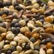 Bird seed — Stock Photo