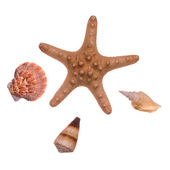 Seashells with starfish isolated — Stock Photo