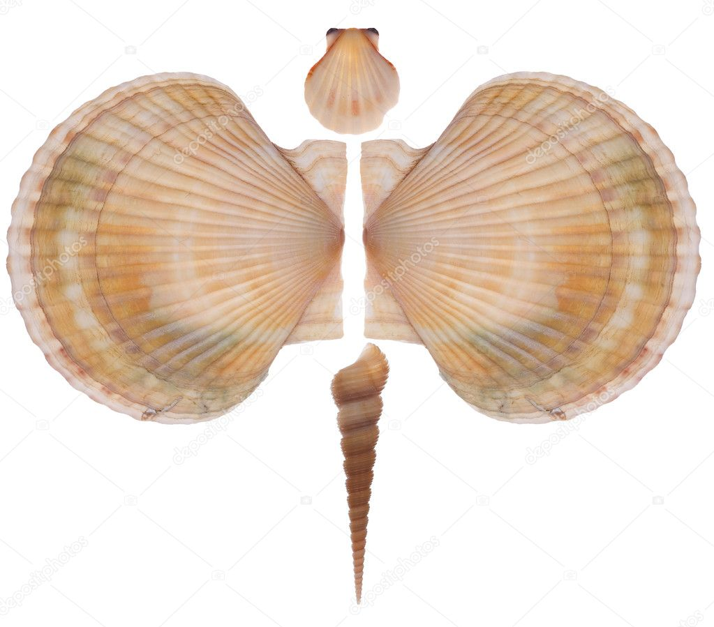Butterfly made of shells stock photo pgkirich 2178819 for What are shells made of