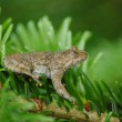 Toad frog — Stock Photo
