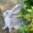 Easter Rabbit - Foto de Stock  