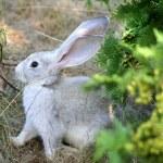 Easter Rabbit — Stock Photo #2183727