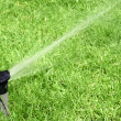 Photo: Lawn Sprinkler