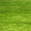 green grass background — Stock Photo #2184259