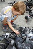 Boy is feeding the birds — Stock Photo