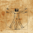 Vitruvian man - Stock Vector