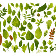 The big collection of leaves — Stock Vector