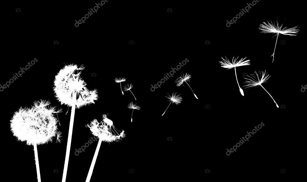 Dandelion in the wind — Stock Vector #2182065