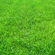 Green grass background — Stock Photo #2315230