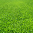 green grass background — Stock Photo #2315355