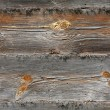 Grungy wooden textured background — Photo #2315603
