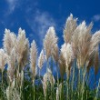 Grass on a sky background — Stock Photo