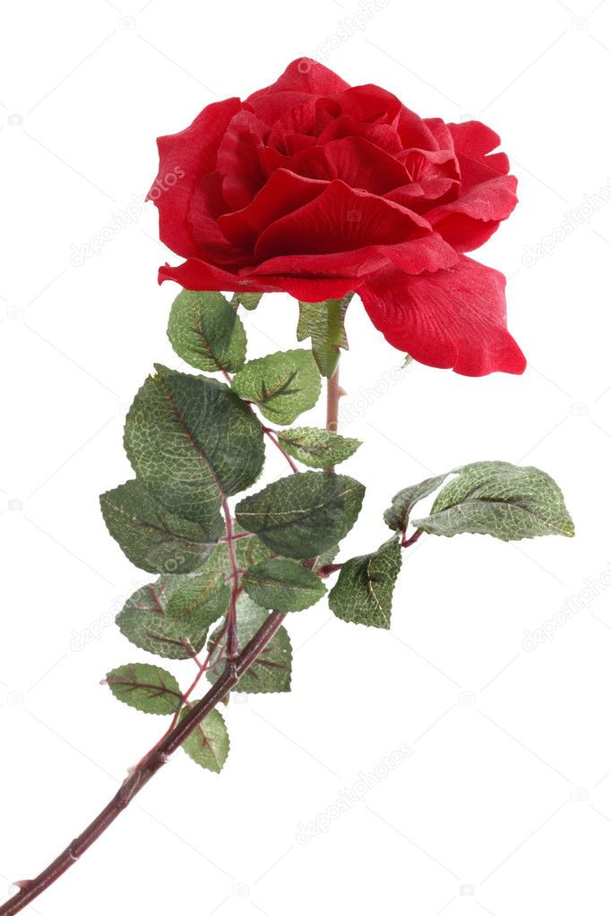 Single Red Rose — Stock Photo #2316271