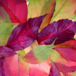 Autumn leaves background — Stock Photo #2417565