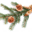 Photo: Isolated pine branch with cones