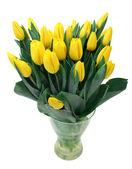 Tulipanes amarillos aislados en blanco — Foto de Stock
