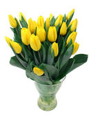 Yellow tulips isolated on white — Stock Photo