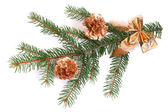 Isolated pine branch with cones — Стоковое фото