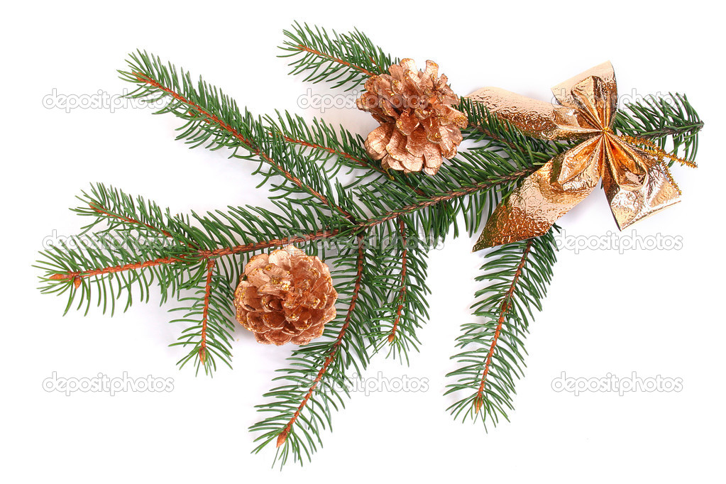 Isolated pine branch with cones — Stock Photo #2417600