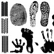 A collection of Vector Fingerprints — Stock Vector