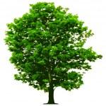 Vector tree — Stock Vector #2607885