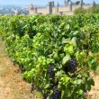 Carcassonne and vineyards — Stock Photo