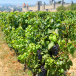 Carcassonne and vineyards - Stock Photo
