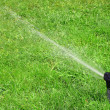 Working lawn sprinkler - Stock Photo