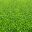 Grass Field — Stock Photo #2673280