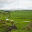 Green fields on a cloudy day — Stock Photo #2274847