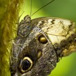 Brown butterfly on a branch — Stock Photo
