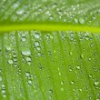Green leaf covered in droplets — Stock Photo
