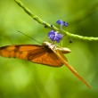 Orange butterfly — Stock Photo #2276426