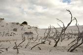 Desert scene — Stock Photo
