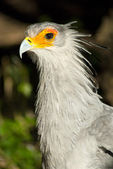 White bird with orange around eyes — Stock Photo