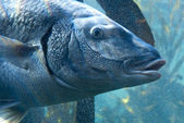 Large fish in bubbles — Stock Photo