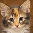 Kitten portrait — Stock Photo