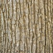 Stock Photo: Texture of tree bark
