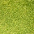 Green grass background — Stock Photo #2285389