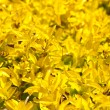 Yellow plants as background - Stock Photo