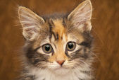 Kitten portret — Stockfoto
