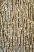 Texture of tree bark — Stock Photo