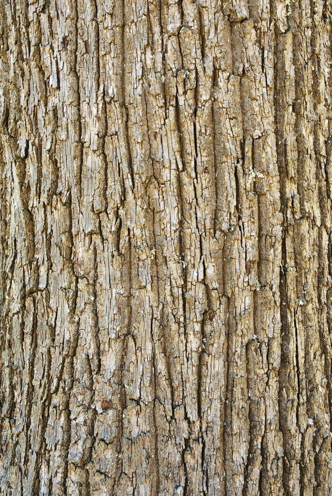 树树皮的纹理