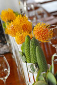 Protea flowera and small cactus plants — Stock Photo