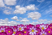 Pink flowers with clouds — Stock Photo