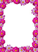 Pink flower frame — Stock Photo