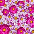 Colorful flower background - Stock Photo