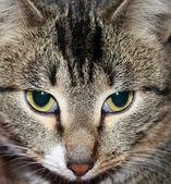 The cat's muzzle — Stock Photo