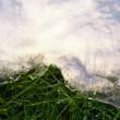 Spring background. Green grass — Stock Photo